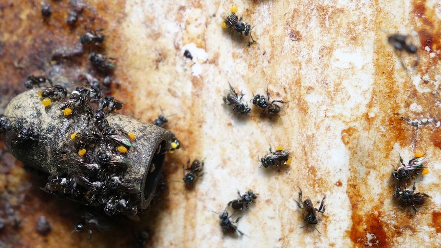 Close-Up Of Flies On Floor