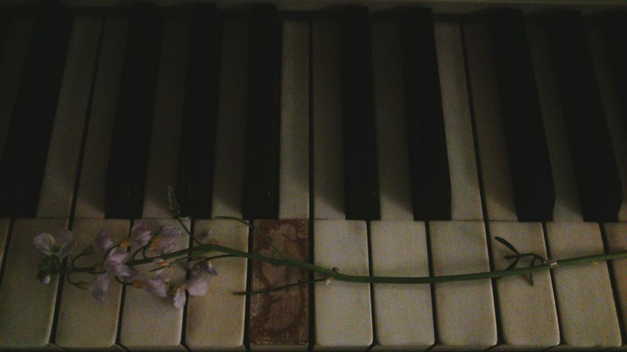 Flower Piano Keys Piano Music