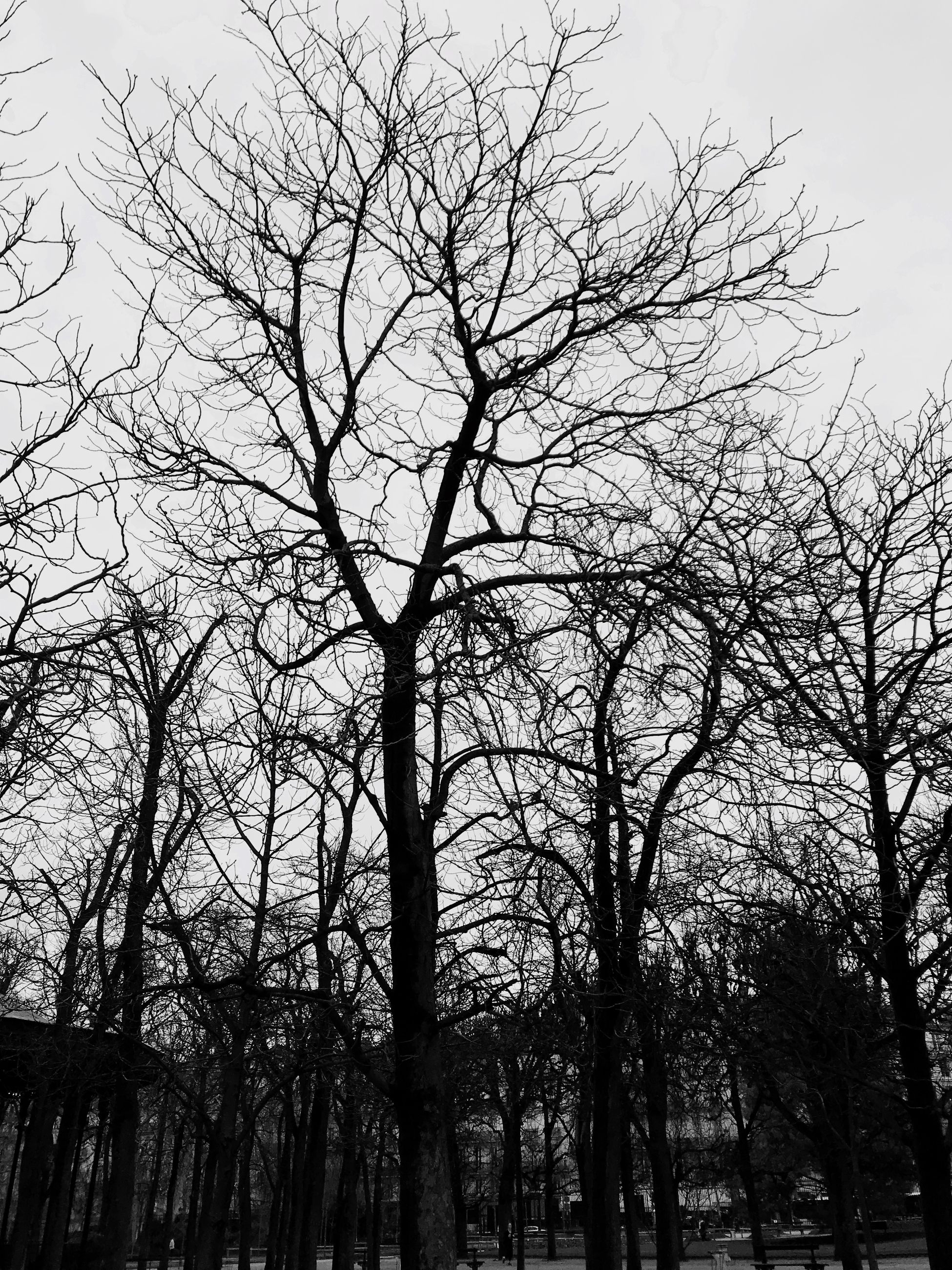 tree, bare tree, low angle view, branch, outdoors, no people, nature, day, tranquility, tree trunk, sky, beauty in nature