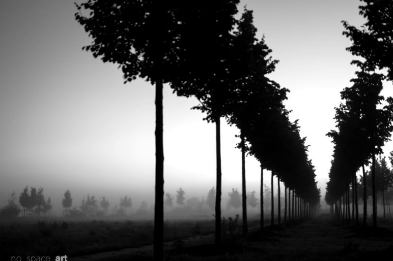 Trees on landscape against clear sky in foggy weather