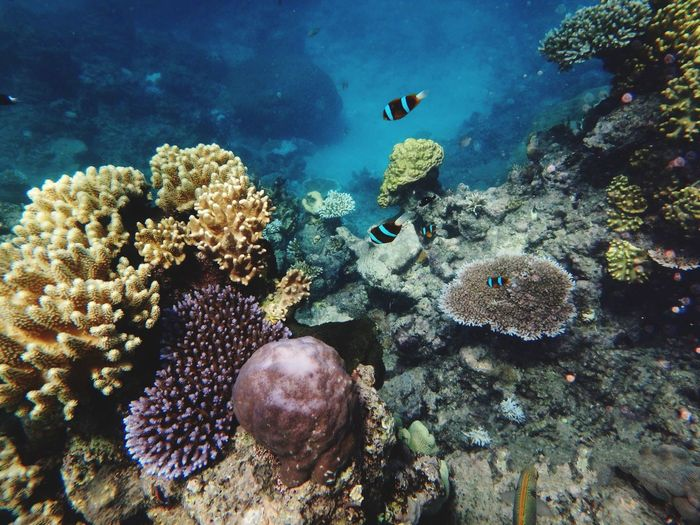 Nemo Great Barrier Reef Sea Life Underwater Animal Themes Animals In The Wild Coral No People UnderSea Nature Beauty In Nature Indoors  Day Close-up Australia Ocean Ocean Life Coral Reef Colorful