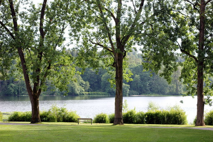 Beauty In Nature Bench Branch Day Empty Park Empty Places Grass Green Color Growth Lake Lakeside Landscape Nature No People Outdoors Parks Parks And Recreation Row Of Trees Scenics Suburban Landscape Tranquil Scene Tranquility Tree Tree Trunk Water