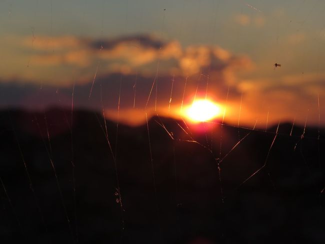 Sunset Sky Nature Beauty In Nature No People Outdoors Close-up Spider Web Sun