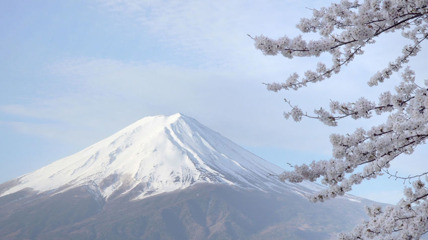 mt.fuji and cherry blossom Beauty In Nature Cold Temperature Covering Day Environment Extreme Weather Idyllic Landscape Mountain Mountain Peak Mountain Range Nature No People Non-urban Scene Outdoors Scenics - Nature Sky Snow Snowcapped Mountain Tranquil Scene Tranquility Tree Winter