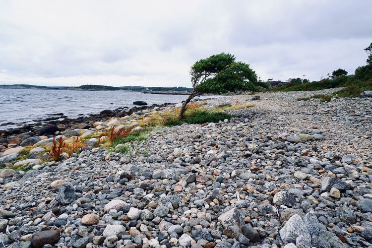 View of pebbles on beach against sky