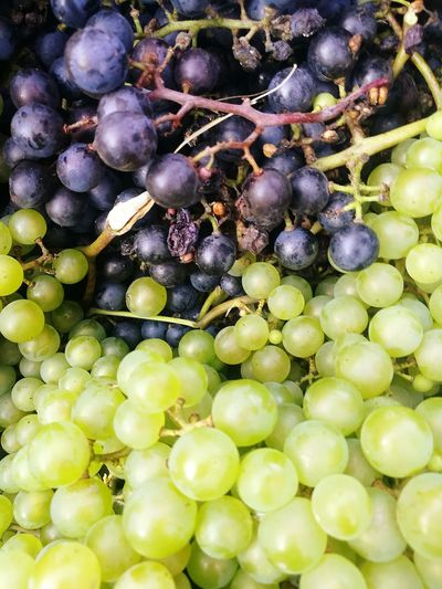 Grapes... Fruit Healthy Eating Food And Drink Food Grape Freshness Green Color Growth Agriculture Healthy Lifestyle Bunch No People Outdoors Grapes Grapes 🍇 Grapes On The Vine Grape Vine Grapes Harvest