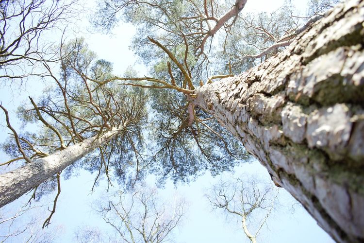 Adventurelands Photography New Forest National Park Bare Tree Beauty In Nature Branch Day Forest Growth Low Angle View Nature No People Outdoors Sky Tranquil Scene Tranquility Tree Tree Trunk