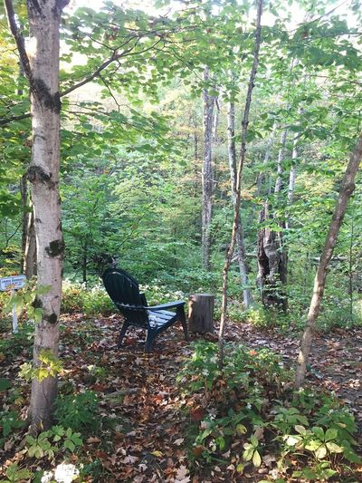 vipassna trail Massachusetts Nofilter Chair Peace Tree Day Growth Outdoors Nature No People Green Color Forest Beauty In Nature An Eye For Travel