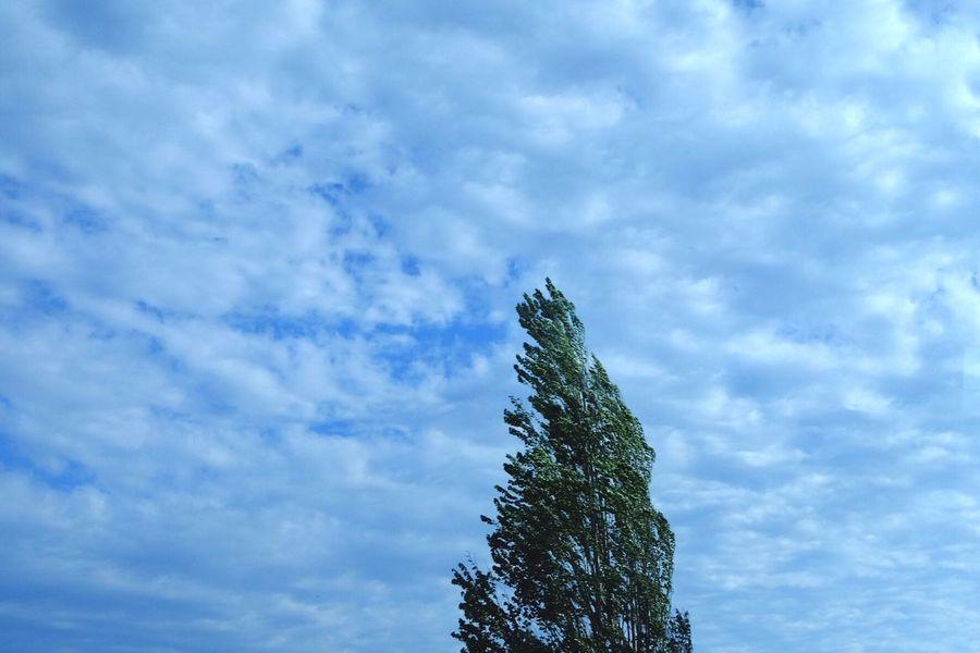 Niigata-shi Japan Sky And Trees Sky EyeEm Gallery