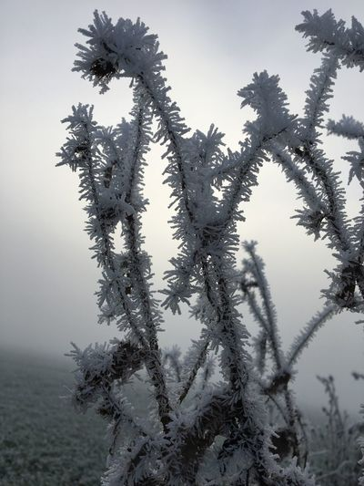 Nature Cold
