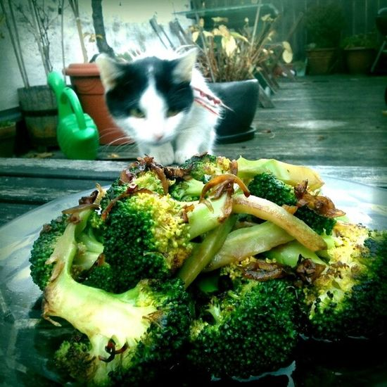 fiffy the thief Food Catcontent My Cat Thx4cooking