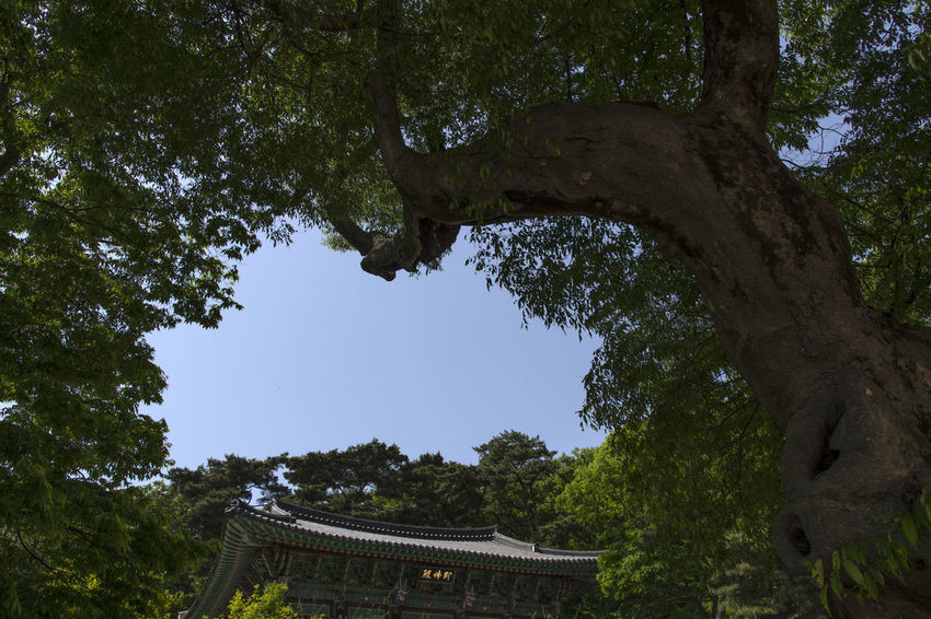 view of Bomunsa, a famous Buddhism temple in Seokmodo, Kimpo, Gyeonggido, South Korea Bomunsa Buddhism Temple Seokmodo Architecture Belief Branch Buddhism Building Building Exterior Built Structure Day Forest Ganghwado Growth Low Angle View Nature No People Outdoors Place Of Worship Plant Religion Roof Sky Temple Tree Tree Trunk Trunk