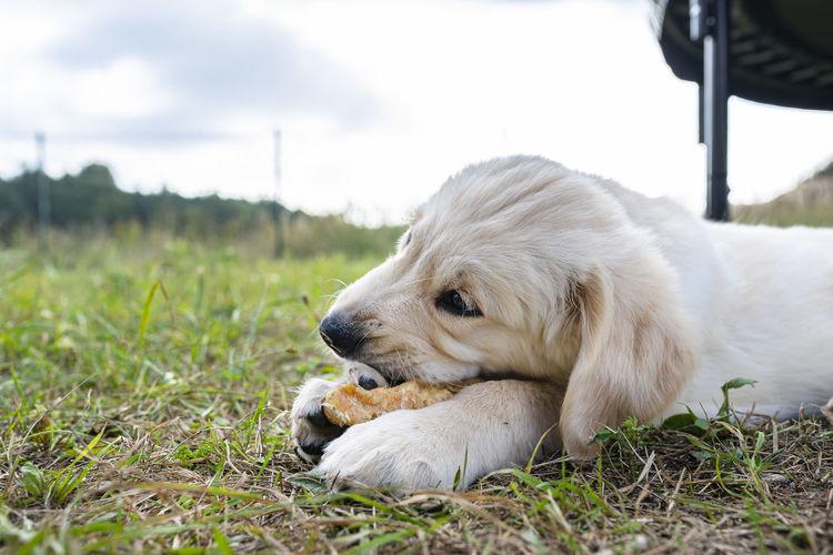 Dog resting on field