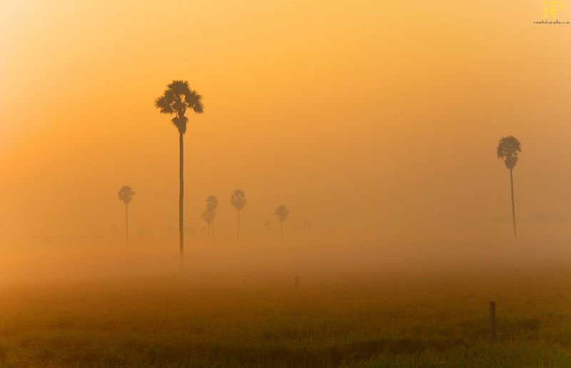 Foggy fealds India Godavari District Farms Nature Mornings Early Mornings Golden Hour Travel Roadtrip Tree Palm Tree Fog Dawn Rural Scene Tree Trunk Field Silhouette Sky Sunbeam Sky Only Sunrise Atmospheric Mood Dramatic Sky Romantic Sky Shining Blooming Sun In Bloom