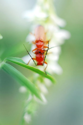 tender Insect