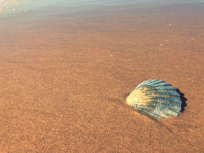Shell Land