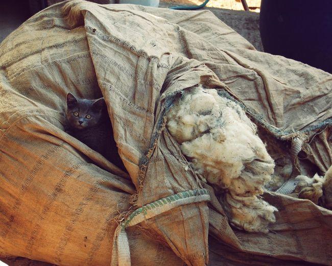Cat Kitten Wool