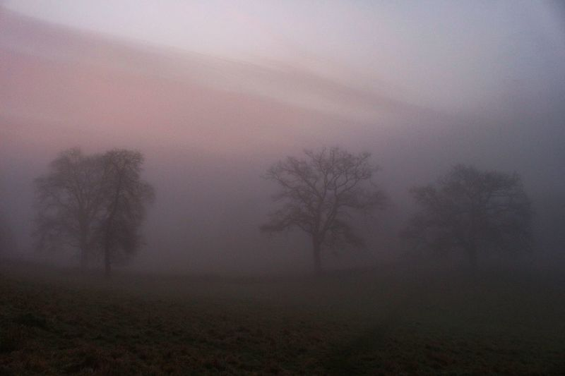 That moment before sunrise when the light grows from soft mist and sound carries announcing morning. Fog Tree Plant Environment Beauty In Nature Tranquility Nature Tranquil Scene Land No People Landscape Scenics - Nature Sky Idyllic Winter Field Textured Effect Morning Outdoors
