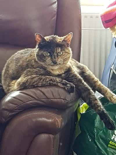 Cat lounger!