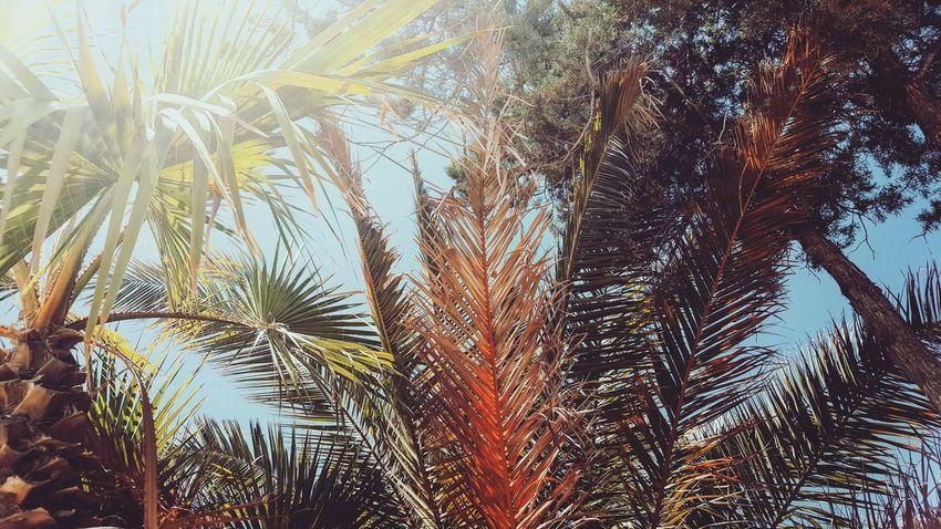 Palm Trees Ibiza Ibiza Rocks Sun Sunbathing EyeEmNewHere Live For The Story BYOPaper! The Great Outdoors - 2017 EyeEm Awards