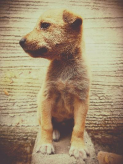 🐶🐕 Dog Doggy Doggie Love EyeEm Selects Mobile Photography Moto G5plusClick Pet Colours Candid Straydogs Puppy Animal Furry Close-up Meerkat Rearing Up Zoo Whisker Paw Animal Leg EyeEmNewHere