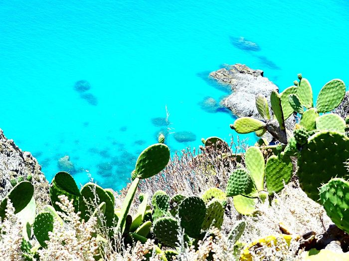 Italy Italia Sea Seaside Protecting Where We Play Cactus Sea View Sea_collection Water Reflections Water_collection A Bird's Eye View