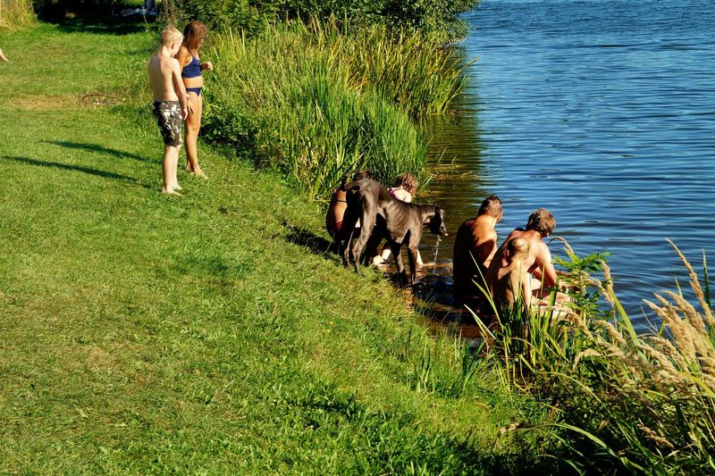 Kids And Pets Family Dog  Great Dane Best Nanny Playing At The Lake Dogs Pets Lakescape Summertime Fun In The Sun Standing In Water At The Lakeshore Beliebte Fotos Showcase August Lake Kinzigsee Langenselbold Germany🇩🇪