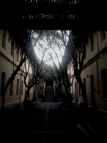 Nature Oldhouse University hermoso día