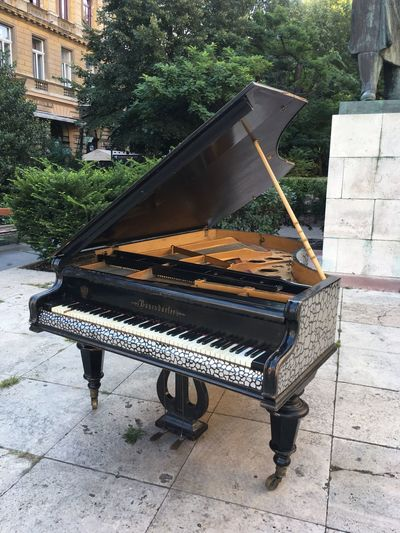 Budapest Empty Piano Grand Piano Bösendorfer Outside Park Bench Wooden Relaxation Outdoors Plant Day Music Grand Piano