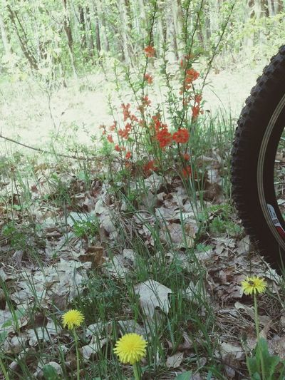 Cycling through the woods __о√О__
