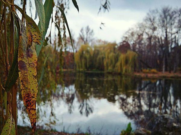 Ternopil Park Pond Autumn Samsung Galaxy A3 Macro EyeEm Nature Lover EyeEm Best Shots Ukraine Trees EyeEm Nature Lake River