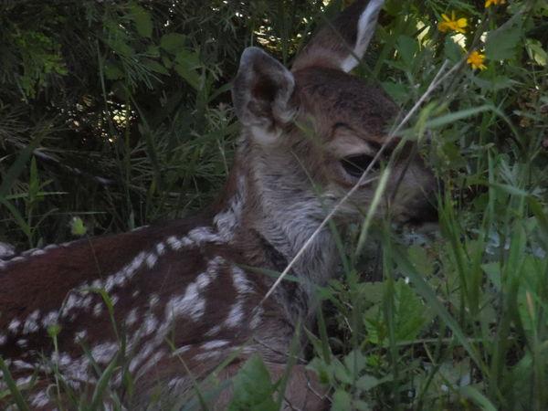 bby cute deer. good times taking photos.