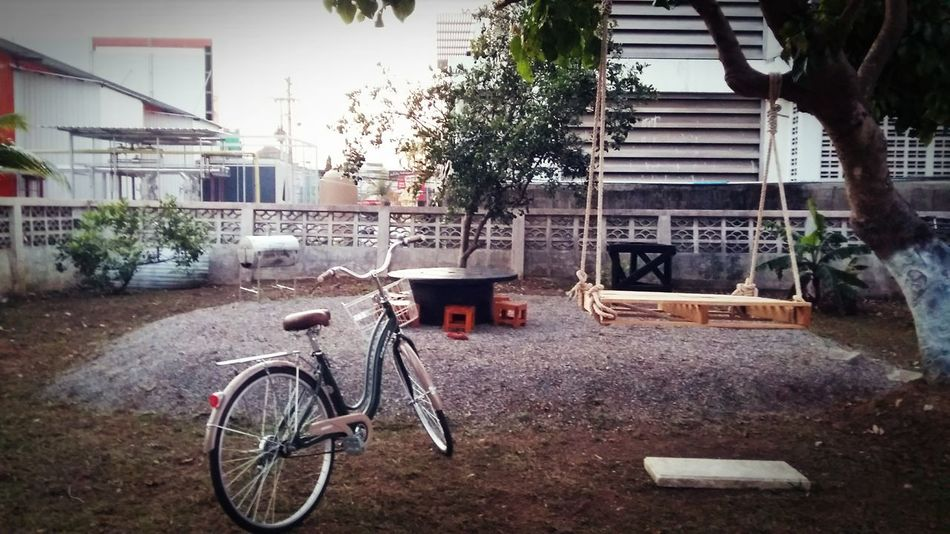 City Tree Bicycle Land Vehicle Bicycle Rack Sidewalk Architecture Building Exterior Built Structure