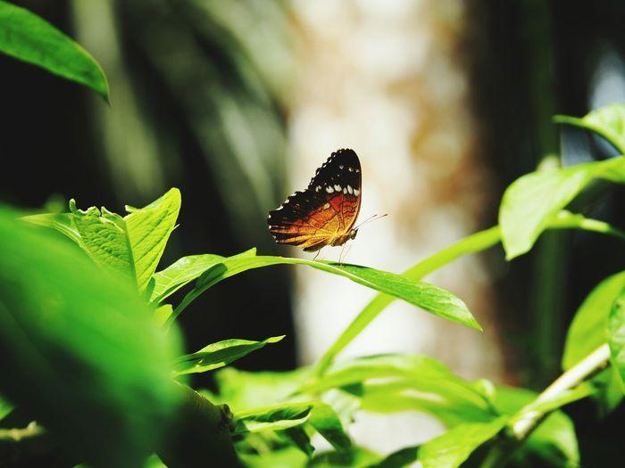 Amazone Amazonia Butterfly Jungle Peru Mariposa Nature Colors