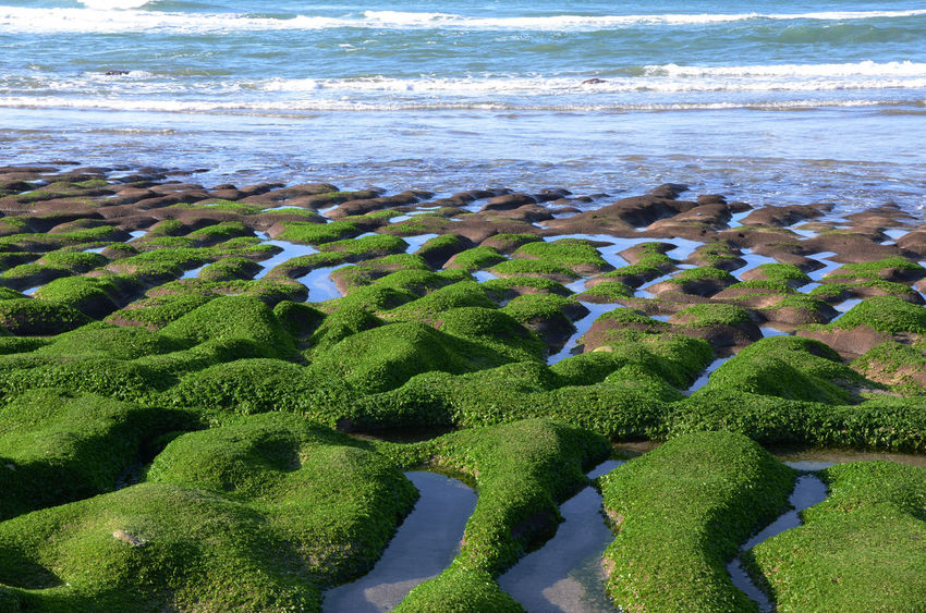 Beauty In Nature Day Green Color Nature No People Outdoors Sand Scenics Sea Tree Water Wave 台灣 老梅石槽