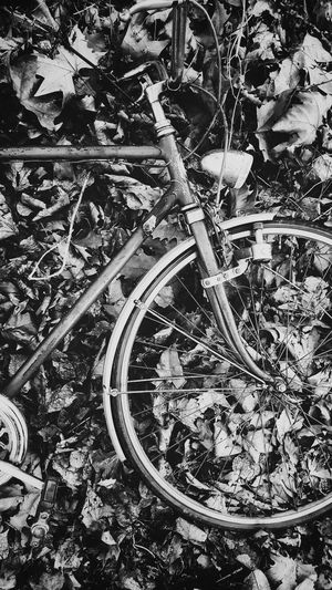 Bicycle Wheel No People Outdoors Minimalist Architecture Hanging Out Taking Photos First Eyeem Photo Check This Out Tranquility Bike Day Leaves Sunlight Black And White Vintage High Angle View