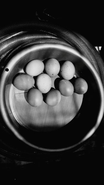 Chicken Eggs Black And White