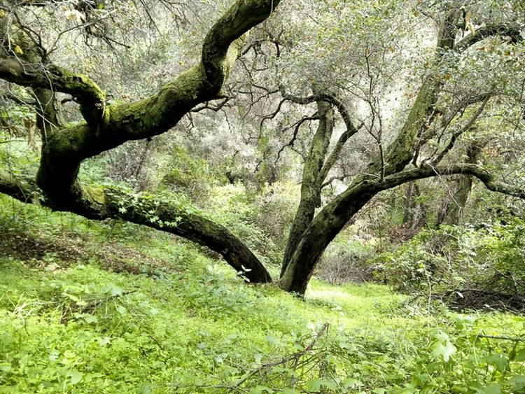 Lots of green in Monrovia Canyon Park this week thanks to a little rain at the beginning of the week. Monrovia Green Nature Hiking