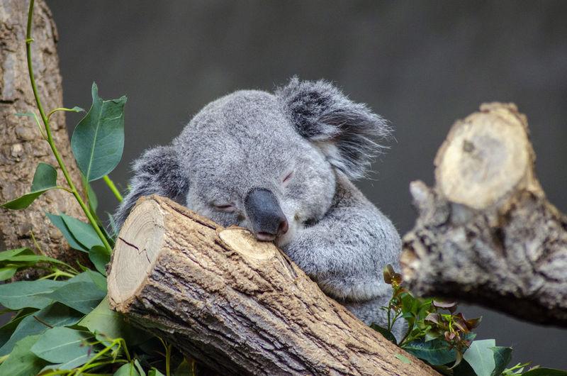 Close-up of animal sleeping on tree trunk