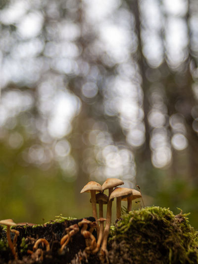 Close-up of mushrooms on land