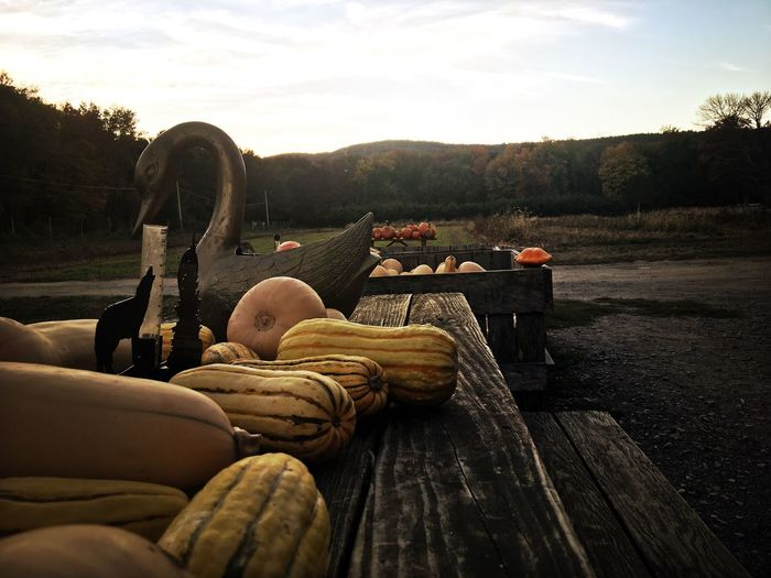 As dusk settled in, I was admiring the fall harvest of gourds