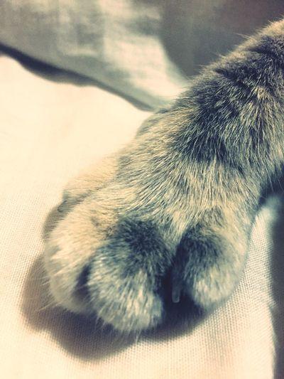 My Cat Pets Cute Pets Cat's Hand Cat
