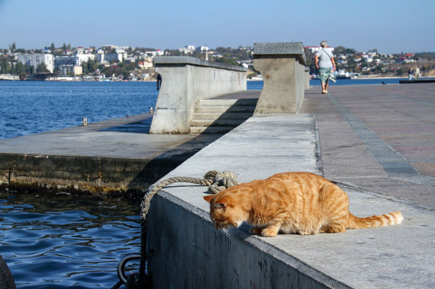 Sevastopol  Animal Themes Architecture Big Cat Building Exterior Built Structure Cat Cat In The Port Cat♡ Day Domestic Animals Mammal Nature No People One Animal Outdoors Pets Red Cat Red Cat 😺 Sky Water Waterfront