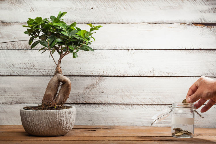 Hand holding potted plant on table against wall