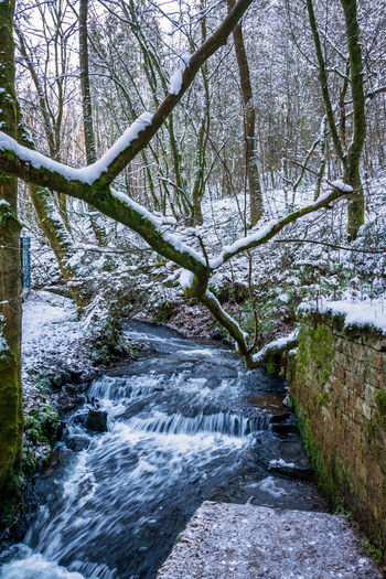 Stream flowing amidst trees in forest during winter