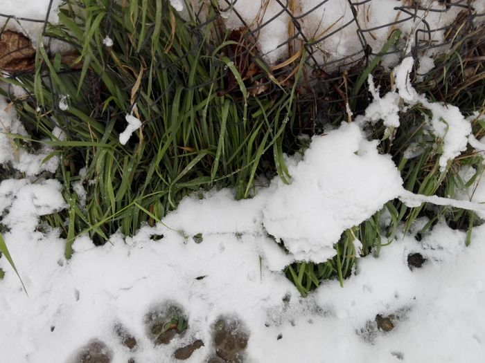 Green Grass And Snow Snow Covering Green Grass Snow Covering Plant Snow Cold Temperature Winter High Angle View Grass Close-up Frozen Weather Growing Weather Condition Icicle Season  Frost Ice Cold Covering Countryside Extreme Weather