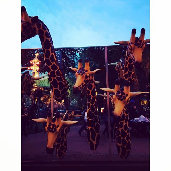 Giraffes at the Tivoli Copenhagen, Denmark