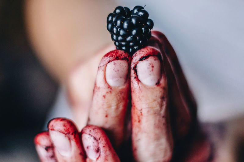 Fingers Blackberry Healthy Eating Hand Holding Fruit Organic Food Fruit Photography Vitamins