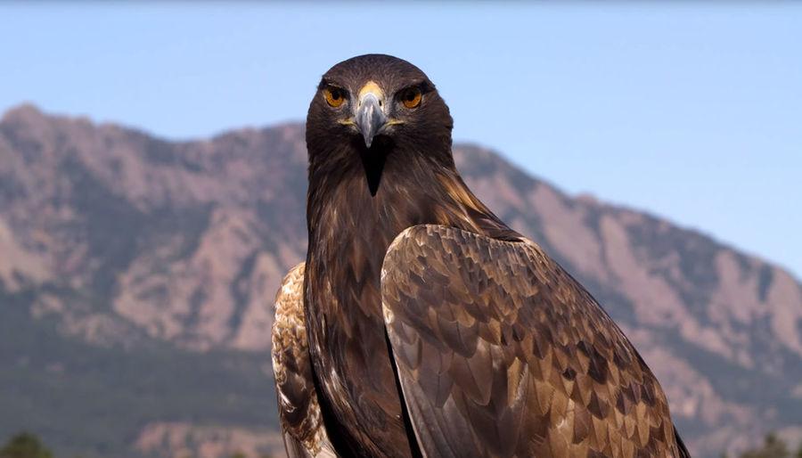 Close-up of eagle against sky