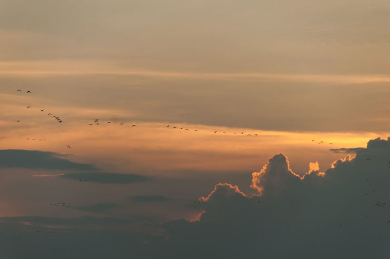 Silhouette Birds Migrating In Cloudy Sky During Sunset